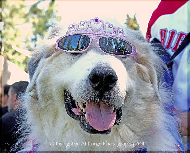 Bend Oregon princess dog