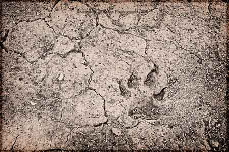 The Badlands Paw Print