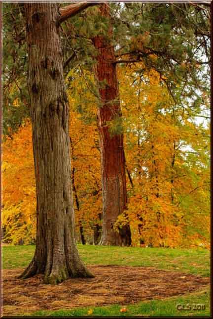 Drake Park Autumn Trees