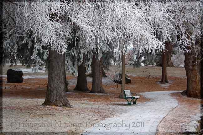 Drake Park Winter
