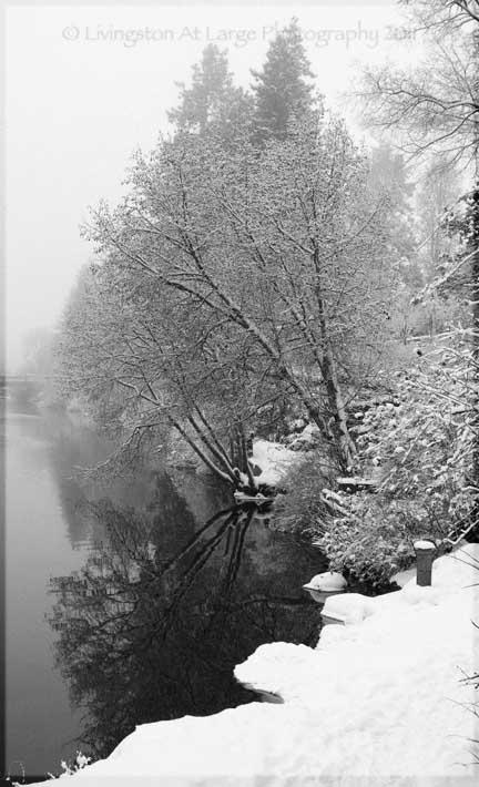 Drake Park Winter Black and White