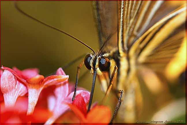 High Desert Museum butterfly