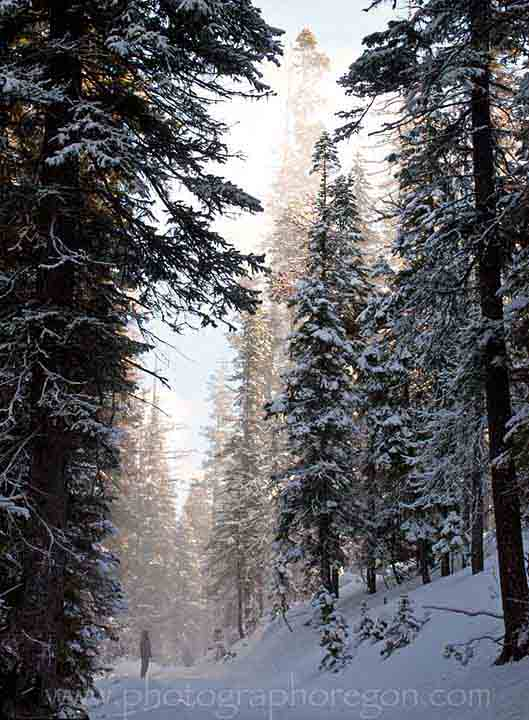 Oregon snowy forest