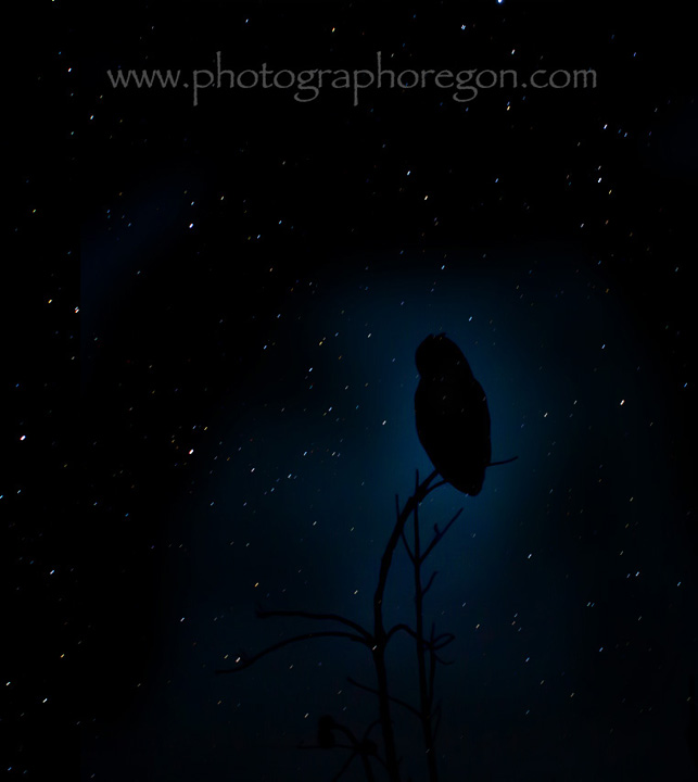 Stars and owl