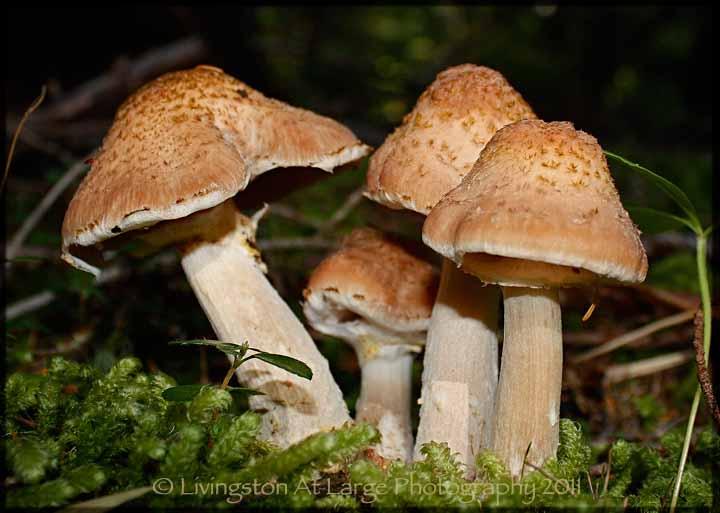 Oregon Wild Mushrooms