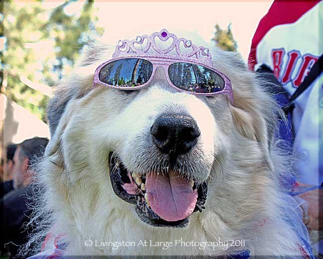 Bend Oregon princess dog