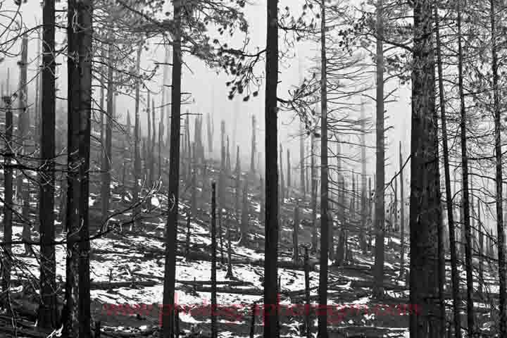 Oregon forest burn