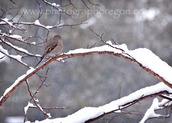 Winter Townsends Solitaire