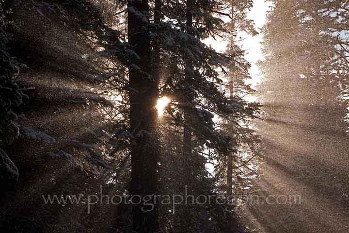 forest snow sun burst
