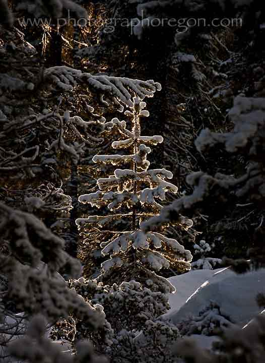 "Oregon sunlight pine""></p><p><br></p><p><p style="