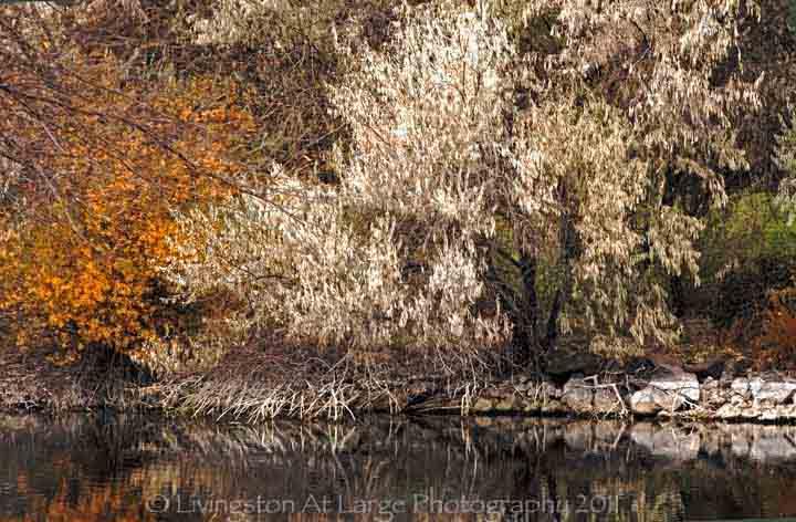 Autumn at Eagle crest