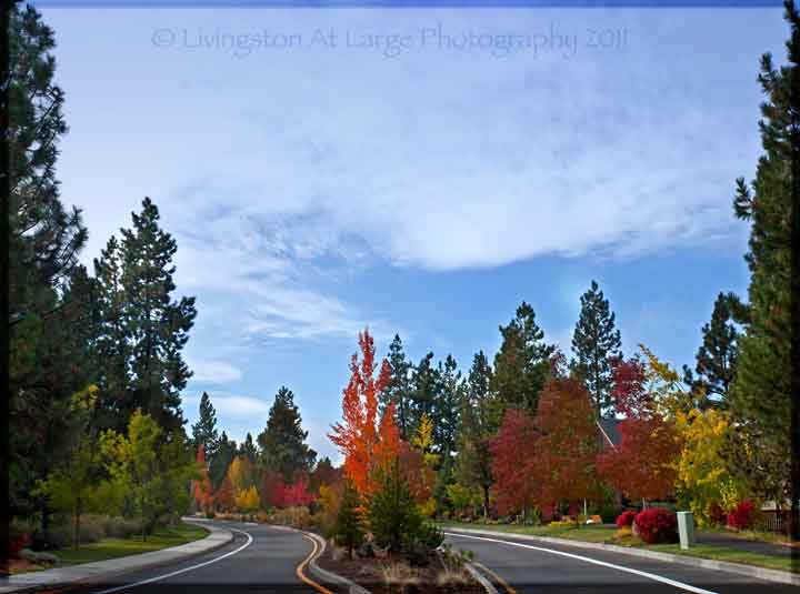 Brookswood fall colors