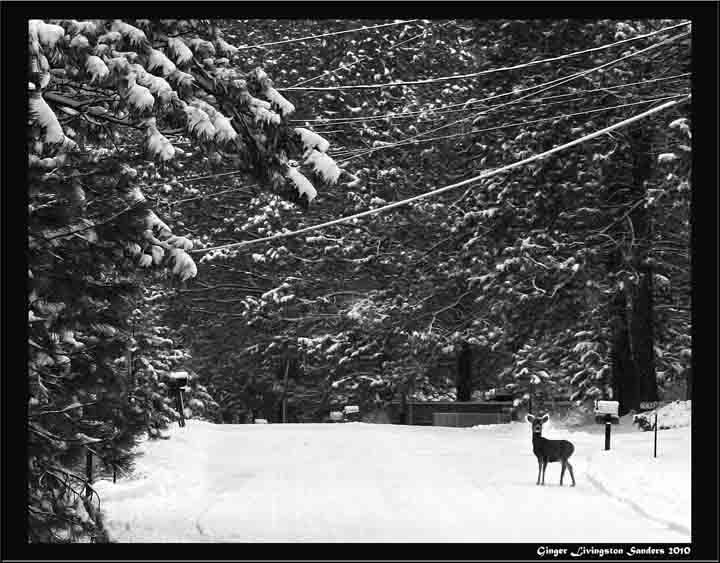 Oregon winter deer